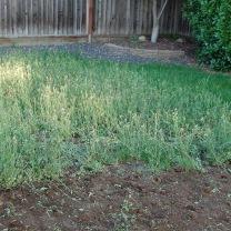 healthy weeds